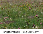 flower meadow in summer | Shutterstock . vector #1152098594