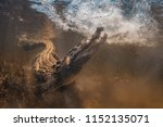 Saltwater Crocodile Underwater...