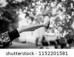 little bird is sitting on a hand | Shutterstock . vector #1152201581
