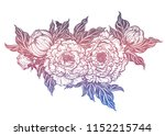 peony flower with leaves and... | Shutterstock .eps vector #1152215744