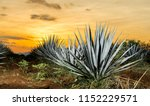 sunset landscape of a tequila... | Shutterstock . vector #1152229571