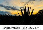 sunset landscape of a tequila... | Shutterstock . vector #1152229574