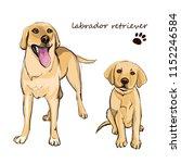 labrador retriever adult dog... | Shutterstock .eps vector #1152246584