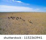 troop of horses on the plain in ... | Shutterstock . vector #1152363941
