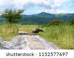 beautiful landscape in mt....   Shutterstock . vector #1152577697