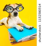 funny back to school cute dog... | Shutterstock . vector #1152580514