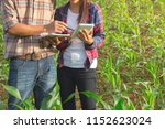 two agricultural researchers... | Shutterstock . vector #1152623024