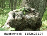 strange form tree. forest ... | Shutterstock . vector #1152628124