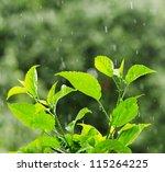 Green Foliage Under A Rain...
