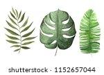 watercolor hand painted...   Shutterstock . vector #1152657044