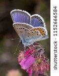 macro portrait photo of perched ... | Shutterstock . vector #1152666584