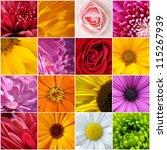 flower color wallpaper | Shutterstock . vector #115267939