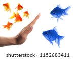 Small photo of discriminating outsider racism or intolerance concept with goldfish and hand