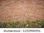 plant with brick wall... | Shutterstock . vector #1152900551