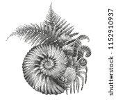 graphic prehistoric seashell... | Shutterstock .eps vector #1152910937