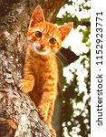 Stock photo red kitten in early autumn on big tree bark close up cute kitten climbing on tree in september on 1152923771