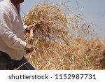 the farmer fanning wheat ...   Shutterstock . vector #1152987731