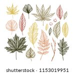 autumn. hand drawn vector... | Shutterstock .eps vector #1153019951