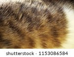Stock photo multicolored grey red and white cat fur with sun light macro photo for texture or background 1153086584
