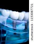 dentist dental teeth teaching... | Shutterstock . vector #1153087721