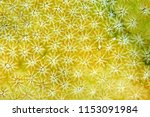 close up of stony coral... | Shutterstock . vector #1153091984