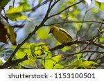 close up of bird | Shutterstock . vector #1153100501