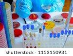 petri dish. microbiological...   Shutterstock . vector #1153150931