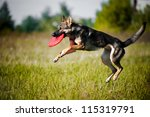 Stock photo dog catching the flying disc in jump 115319791