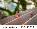 tree and leave   Shutterstock . vector #1153199827