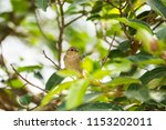 sparrow on the tree  | Shutterstock . vector #1153202011
