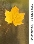 autumn leaf on the glass. maple ... | Shutterstock . vector #1153215667