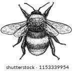 bumblebee  bombus terrestris ... | Shutterstock .eps vector #1153339954