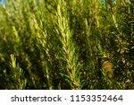 full frame shot of fresh... | Shutterstock . vector #1153352464