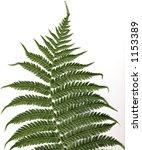 tree fern leaf high resolution... | Shutterstock . vector #1153389