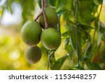 close up of green oval... | Shutterstock . vector #1153448257
