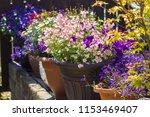 beautiful  summer garden with... | Shutterstock . vector #1153469407