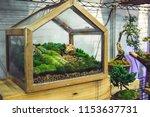 tree garden in glass bottles. | Shutterstock . vector #1153637731