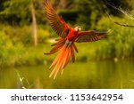 beautiful macaw with spread... | Shutterstock . vector #1153642954
