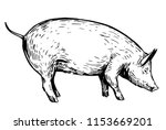 sketch of pig. hand drawn... | Shutterstock .eps vector #1153669201