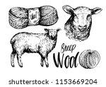 sheep sketch. wool. hand drawn... | Shutterstock .eps vector #1153669204