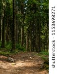 path in forest.  | Shutterstock . vector #1153698271