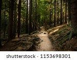 path in forest. karkonosze... | Shutterstock . vector #1153698301
