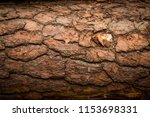 bark background. natural... | Shutterstock . vector #1153698331