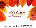 autumn leaf border | Shutterstock . vector #115373221