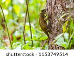 lizard lays on a tree in the... | Shutterstock . vector #1153749514