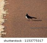chirpy little juvenile ... | Shutterstock . vector #1153775317