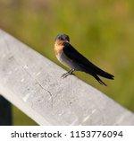 a dainty delightful  little... | Shutterstock . vector #1153776094