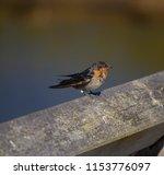 a dainty delightful  little... | Shutterstock . vector #1153776097