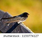 a dainty delightful  little... | Shutterstock . vector #1153776127