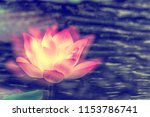 lotus flower and green leaf...   Shutterstock . vector #1153786741